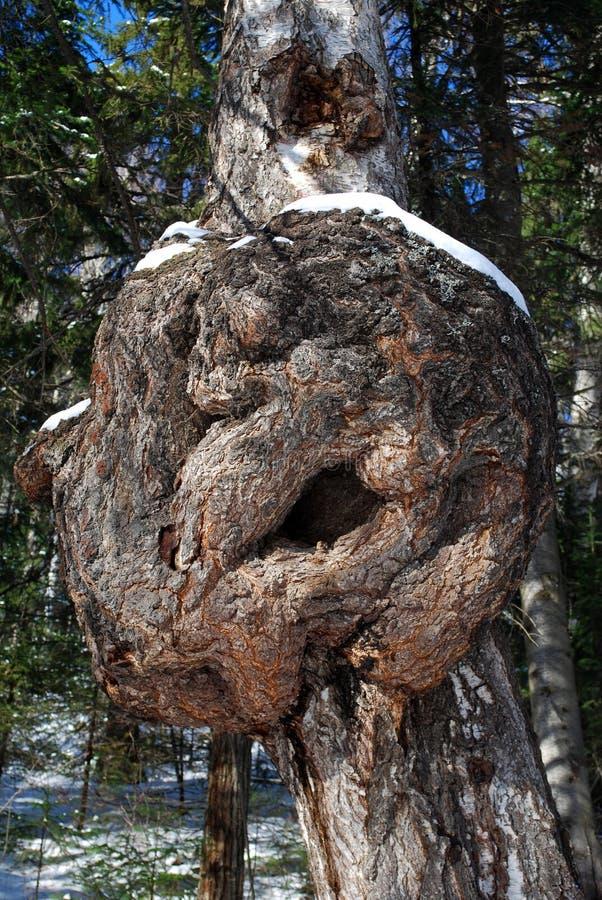 Carcinoma no tronco de árvore fotos de stock royalty free