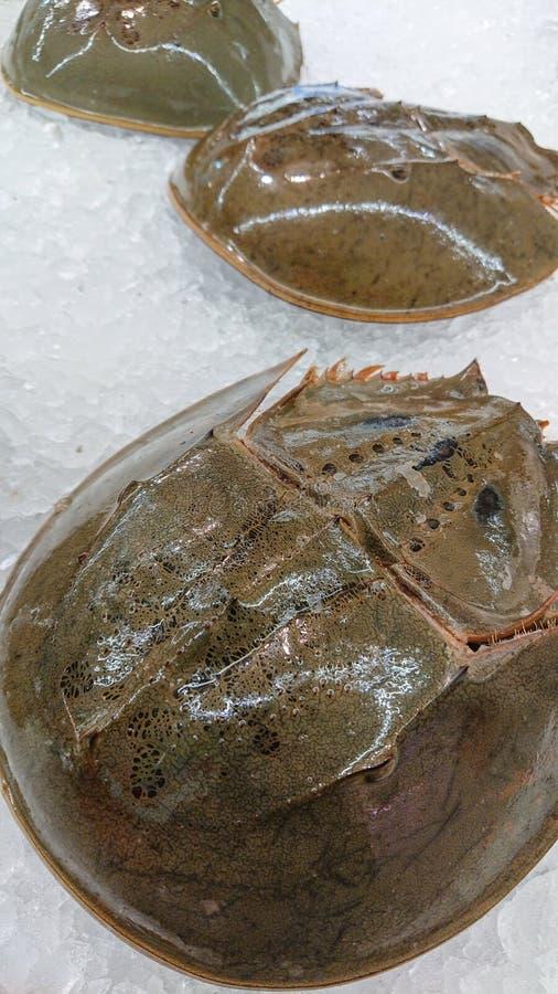 Carcinoscorpius rotundicauda på is i marknad arkivbild