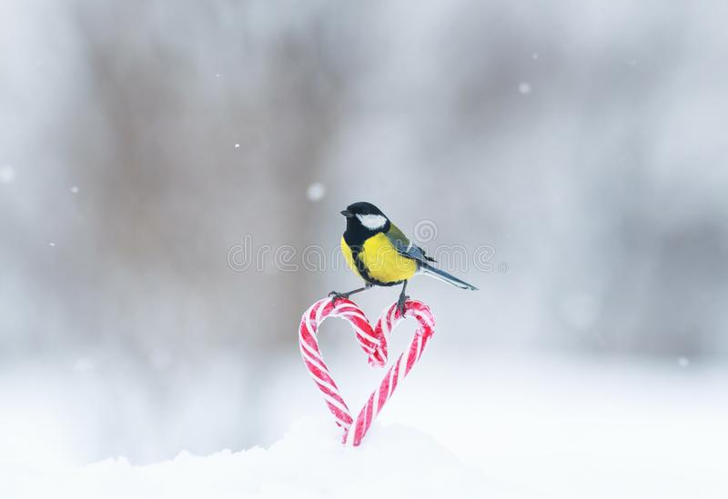 Greeting card with cute little bird tit flies to a frame of red sweet heart-shaped lollipops in white snow on Valentine`s Day stock photography