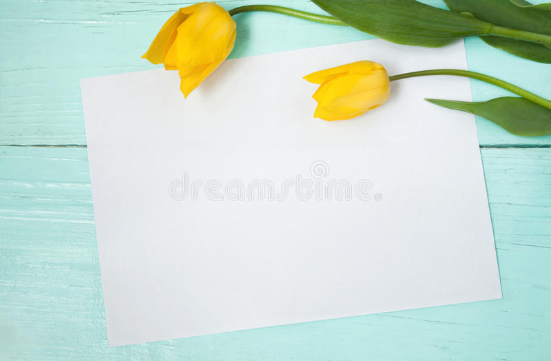 Card for Easter, March 8, mothers day. Beautiful Blank Card for Easter, March 8, valentines day, mothers day. Two yellow tulips on wooden light blue background stock images