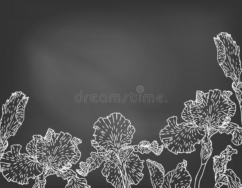 Card with hand drawn iris flowers on chalkboard. vector illustration