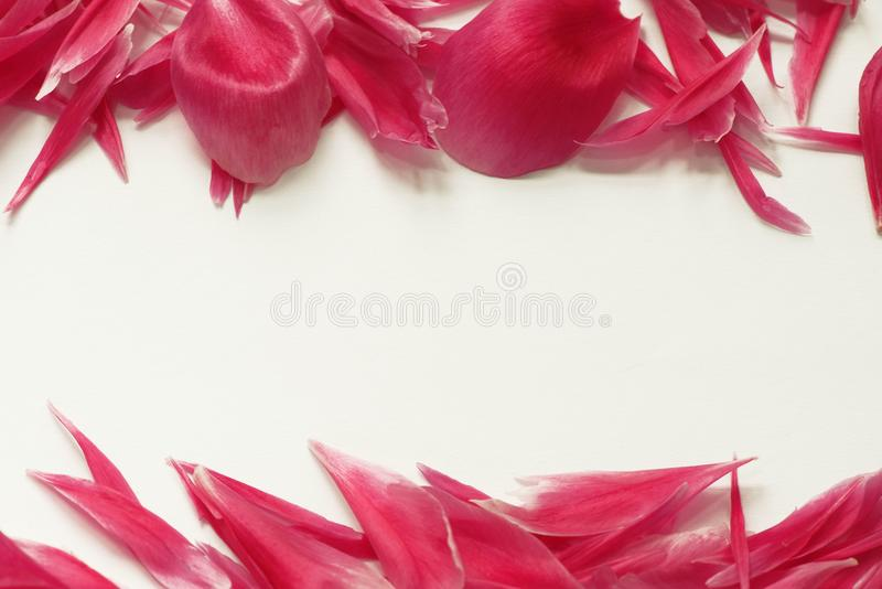 Card with horizontal frame of pink peony petals. Horizontal pink peony border with white space for text in the middle. Flat lay top view royalty free stock photos