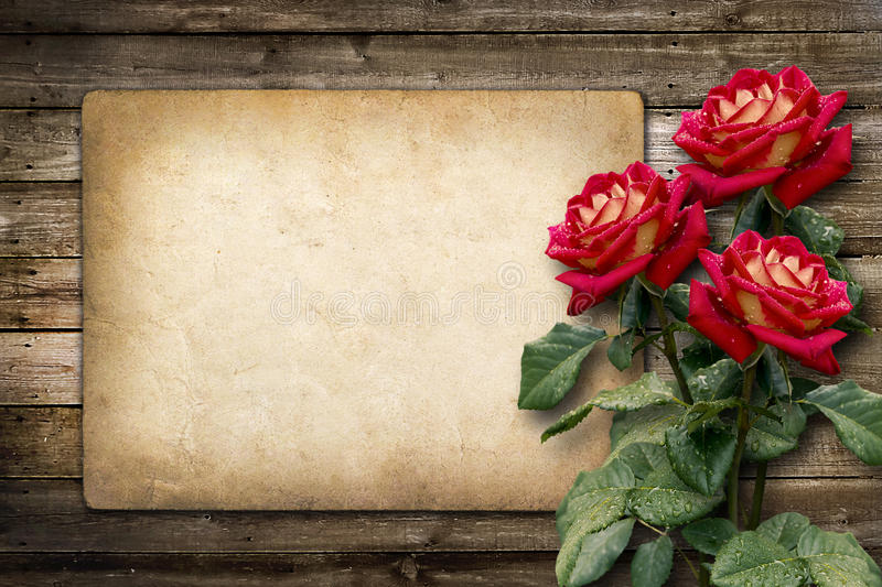 Card for invitation or congratulation with red rose royalty free stock photos