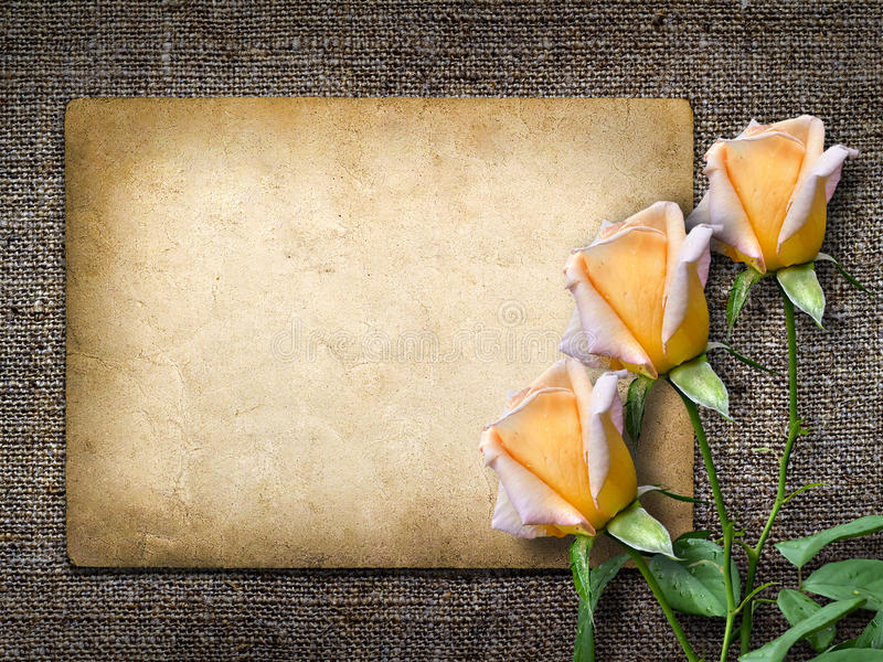 Download Card For Invitation Or Congratulation With Yellow Rose Stock Image - Image: 34244505