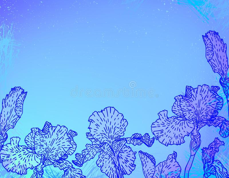 Card with iris flowers on blue watercolour. Card with hand drawn iris flowers on abstract blue watercolour background. Template for spa promotion, flower shop royalty free illustration