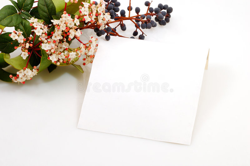 Download Card for love stock image. Image of plant, isolated, drops - 2312347