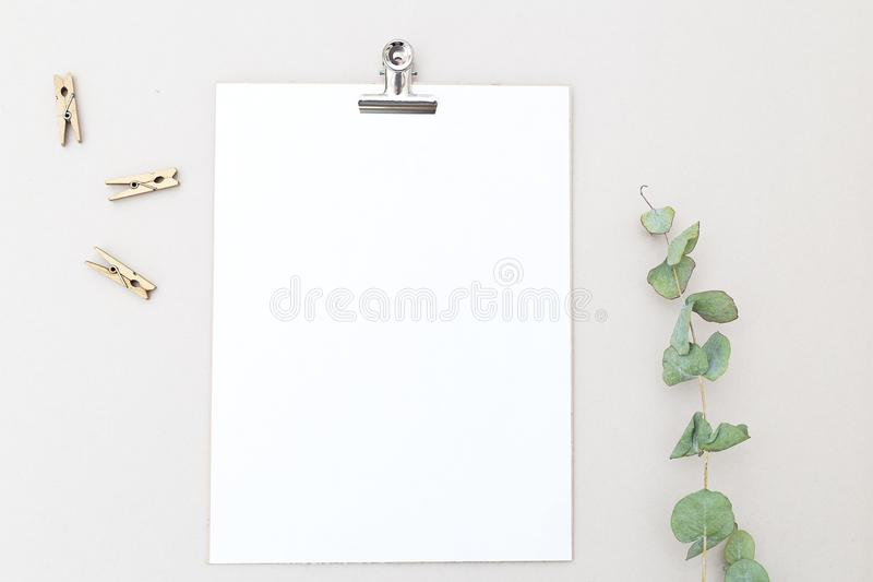 Card mock up and eucalyptus flower on gray background. Flat lay royalty free stock image