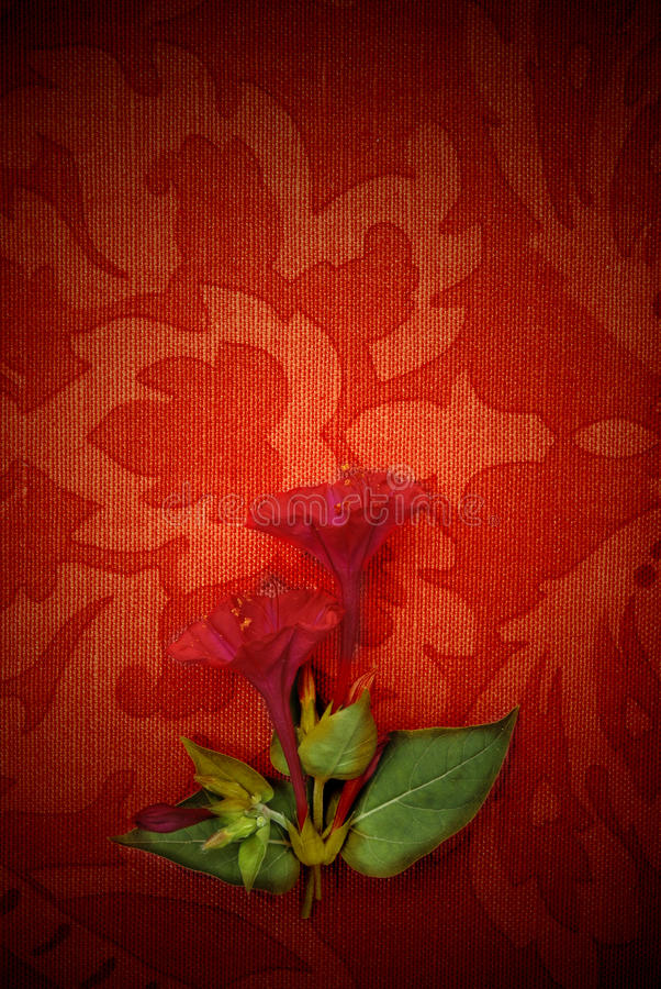 Card, red passion and flower. Flower background, passion red fabric royalty free stock photo