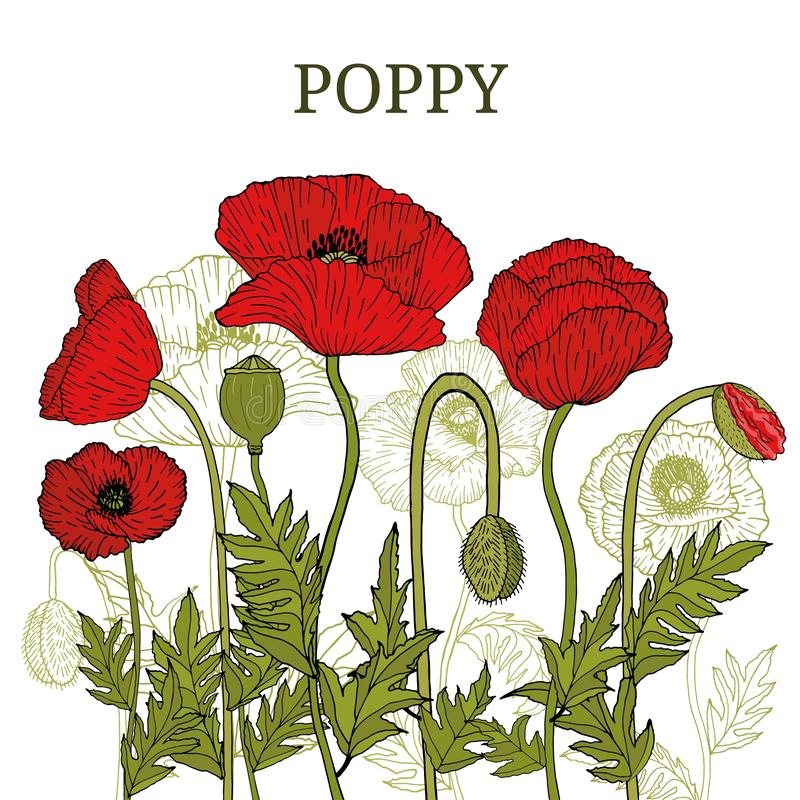Card, template, banner hand drawing of leaves flowers of red poppy. stock illustration