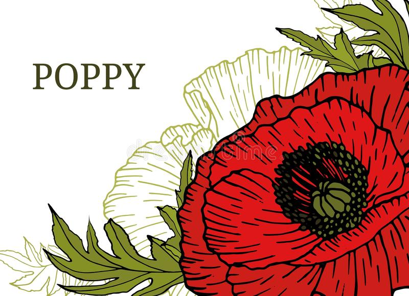 Card, template, banner hand drawing of leaves flowers of red poppy. vector illustration