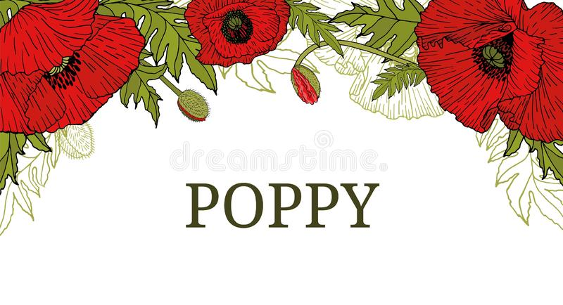 Card, template, banner, header hand drawing of leaves flowers of red poppy. royalty free illustration