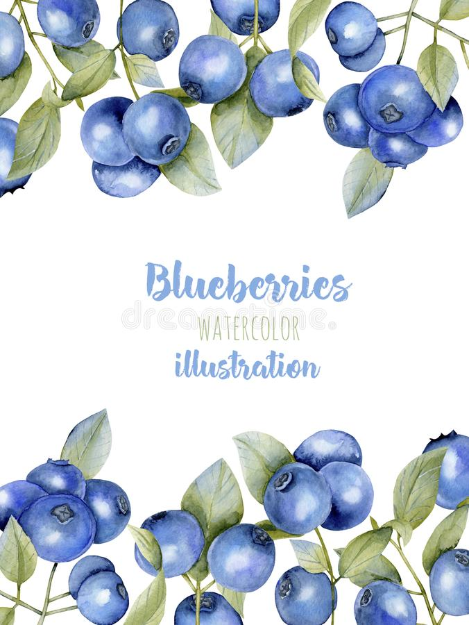Card template with watercolor blueberries branches, frame border background vector illustration