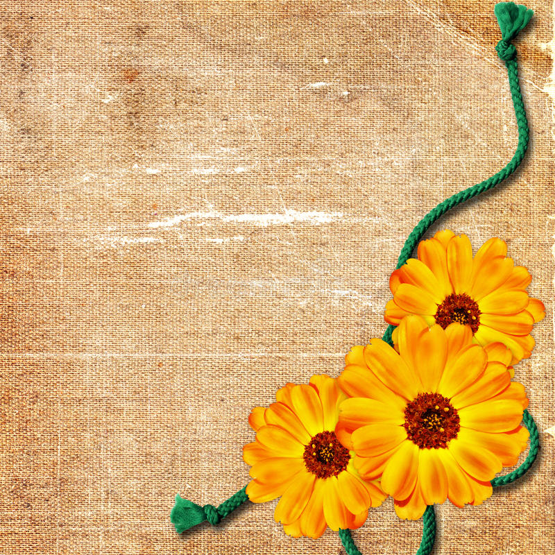 Card with yellow flowers on grunge background vector illustration