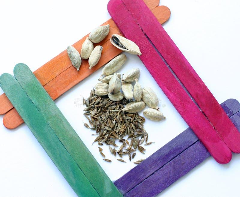 cardamoncumminen kärnar ur kryddor royaltyfri bild