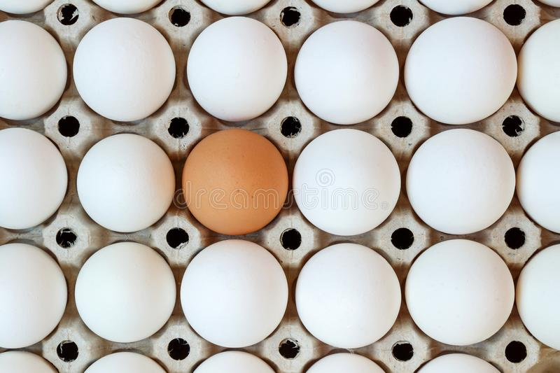 Cardboard tray with white chicken eggs and one brown egg. Top view stock photos