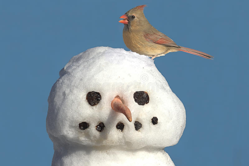 Cardenal en el muñeco de nieve fotografía de archivo libre de regalías