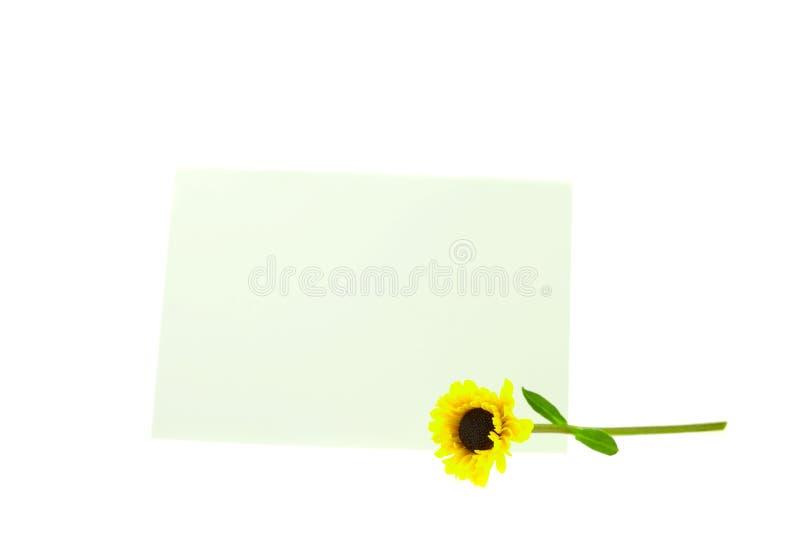 Cardi e un fiore giallo isolato su bianco immagini stock