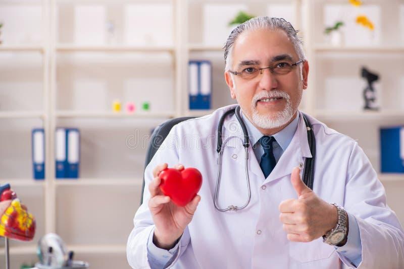 Cardi?logo de sexo masculino envejecido del doctor con el modelo del coraz?n imágenes de archivo libres de regalías