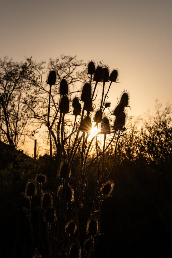 Cardi nel tramonto immagine stock libera da diritti