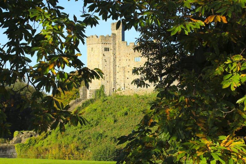 Cardiff slottyttersida i mitten av Cardiff i höstsolskenet royaltyfria foton