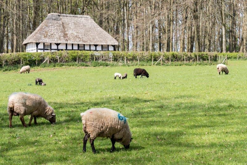 CARDIFF/UK - 4月19日:在圣Fagans Natio的Abernodwydd农舍 免版税库存照片
