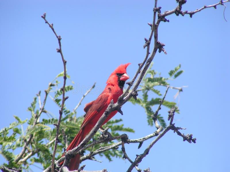 Cardinal. MINOLTA DIGITAL CAMERA stock images