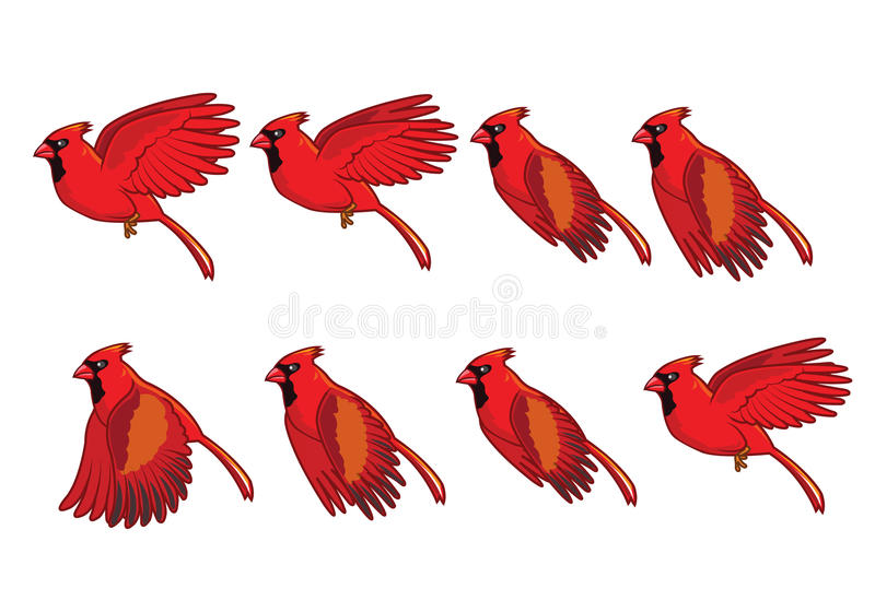 Cardinal Bird Flying Sequence. For game or animation vector illustration