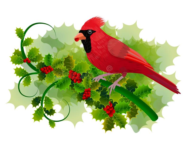 Cardinal bird on holly branch with green leaves and red berries. Isolated on white background. vector illustration
