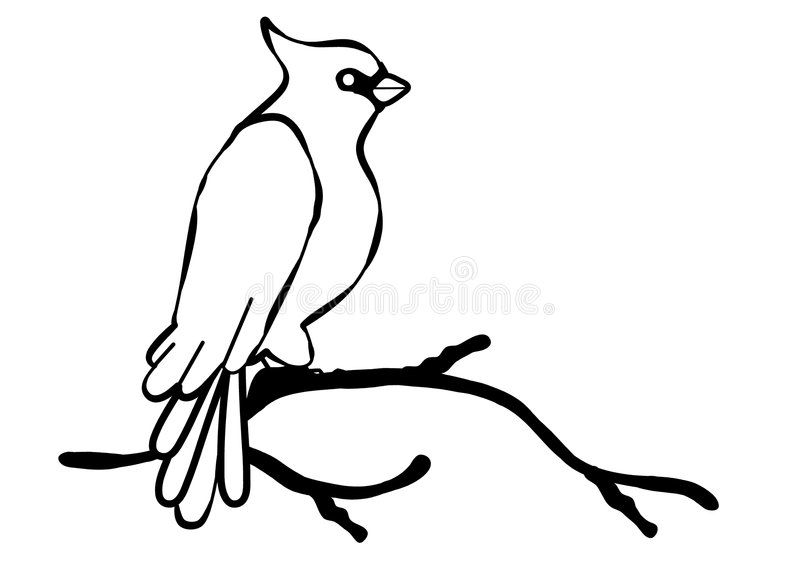 Cardinal Bird Line Art. An illustration of a cardinal bird. Line art (black and white illustrations) are perfect for projects where color is not an option or stock illustration