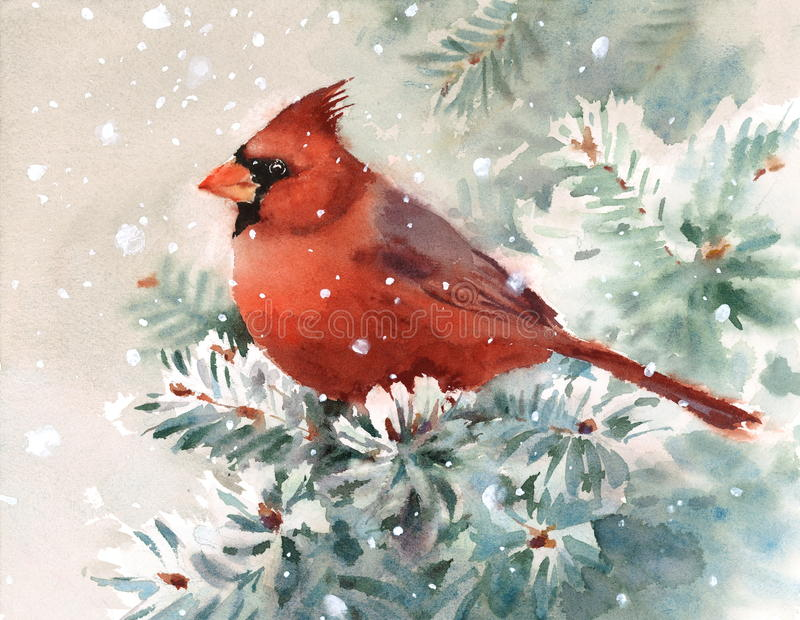 Cardinal Bird Watercolor Winter Illustration Hand Drawn vector illustration