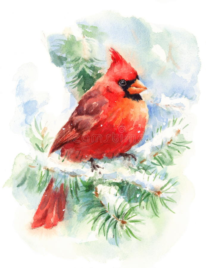 Cardinal Bird Watercolor Winter Illustration Hand Painted. Hand painted Watercolor illustration of Male Northern Cardinal stock illustration