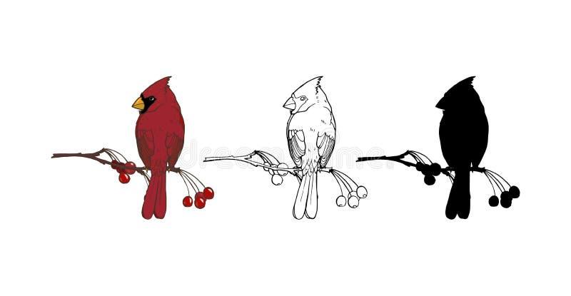 Cardinal du nord, un oiseau de la famille des pinsons illustration stock