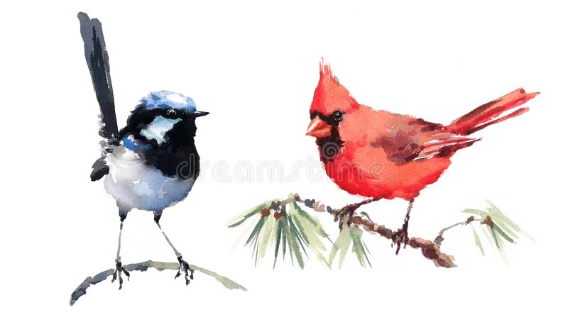Cardinal and Fairy Wren Birds Watercolor Illustration Set Hand Drawn. Hand drawn Watercolor illustration Set of Northern Cardinal and Fairy Wren Birds on white royalty free illustration