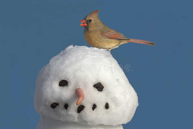 Cardinal On Snowman Royalty Free Stock Photos