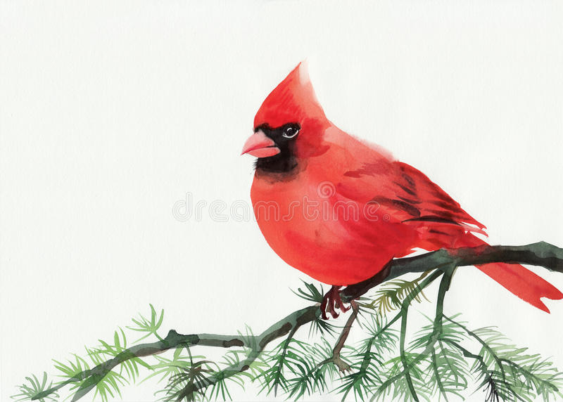 Cardinal. Watercolor painting of cardinal bird sitting on a branch royalty free illustration