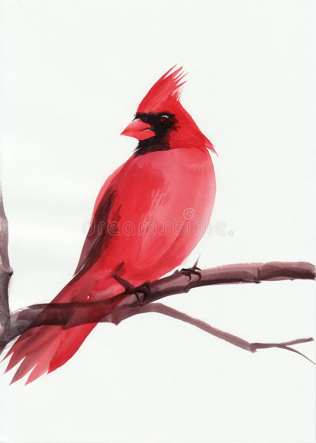 Cardinal. Watercolor painting of cardinal bird sitting on a branch vector illustration
