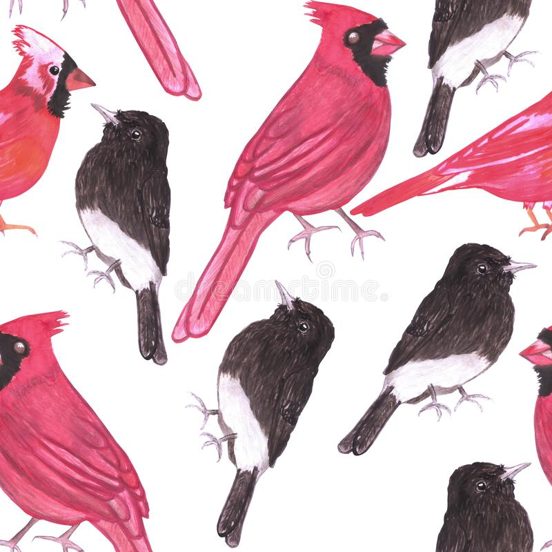 Cardinals and black phoebe seamless watercolor repeat background.  royalty free illustration