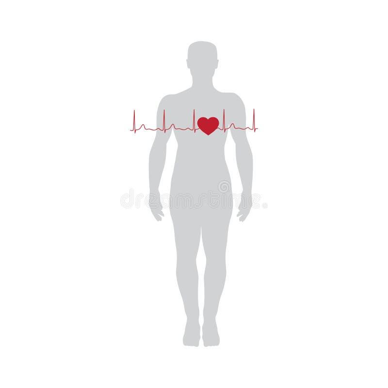 cardiogram ligne de coeur, vecteur illustration libre de droits