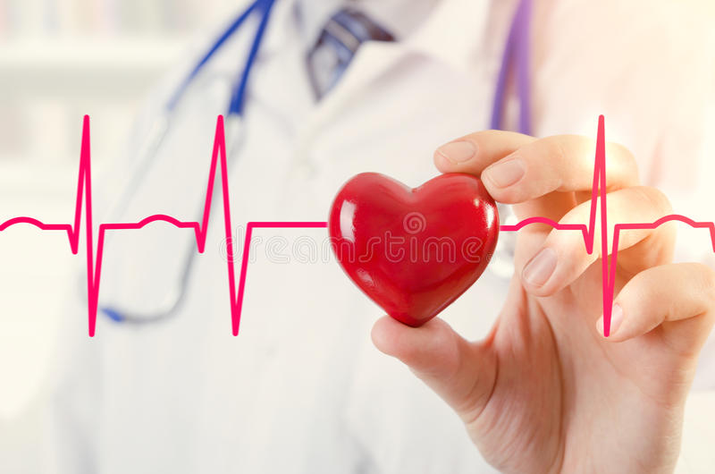 Cardiologist holding heart 3D model. Concept with cardiogram stock photography