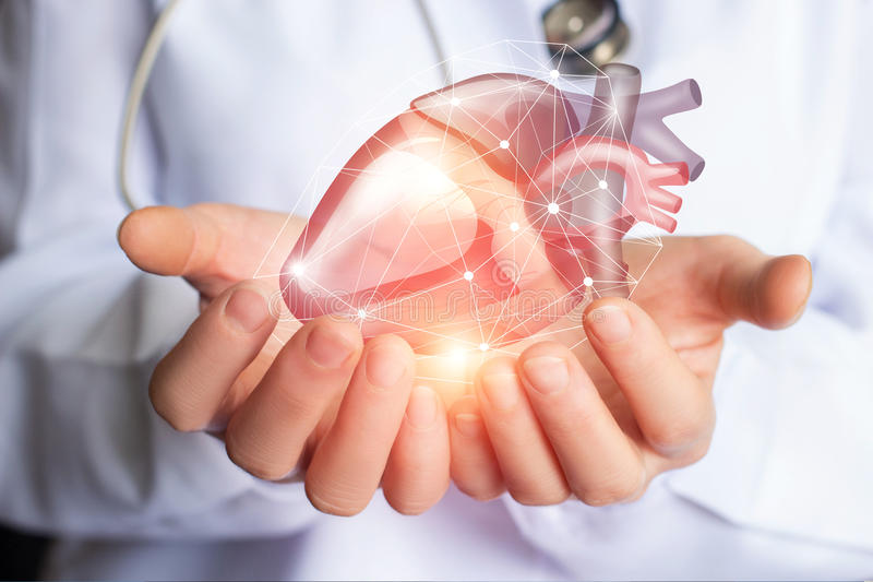 Cardiologist supports the heart . Cardiologist supports the heart of man hands royalty free stock image
