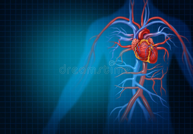 Cardiology And Cardiovascular Heart Concept. As a human blood circulation health medical symbol representing a healthy circulatory heart organ with veins and stock illustration