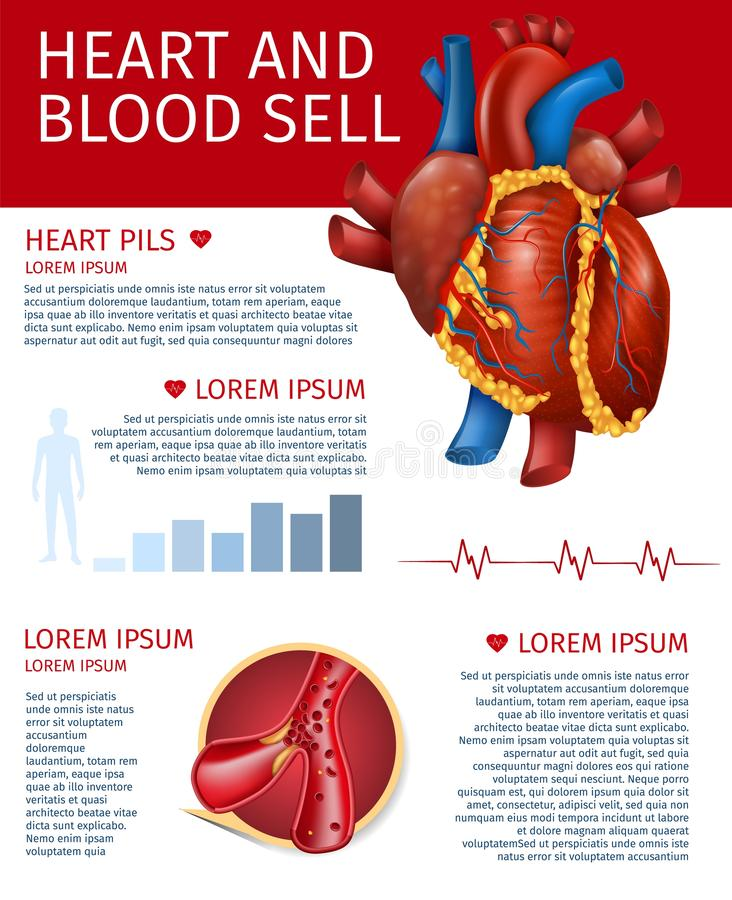 Realistic Heart and Blood Sell Banner with Diagram. Cardiovascular Organ Health and Disease Vertical Info Banner about Blood Flow and Cells, Heart Pills. Vector vector illustration