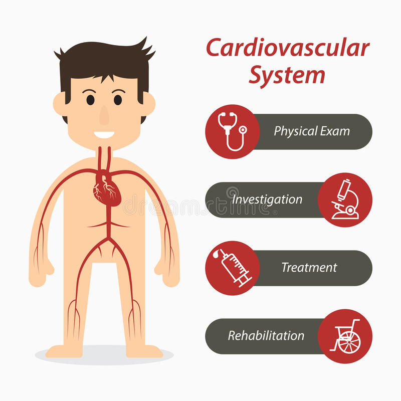 Cardiovascular system and medical line icon stock illustration