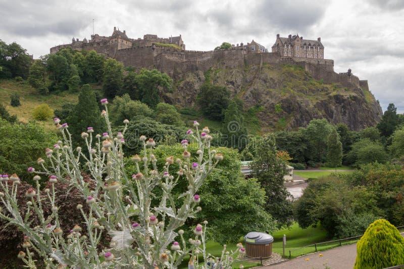 Cardo na frente do castelo de Edimburgo, Escócia foto de stock
