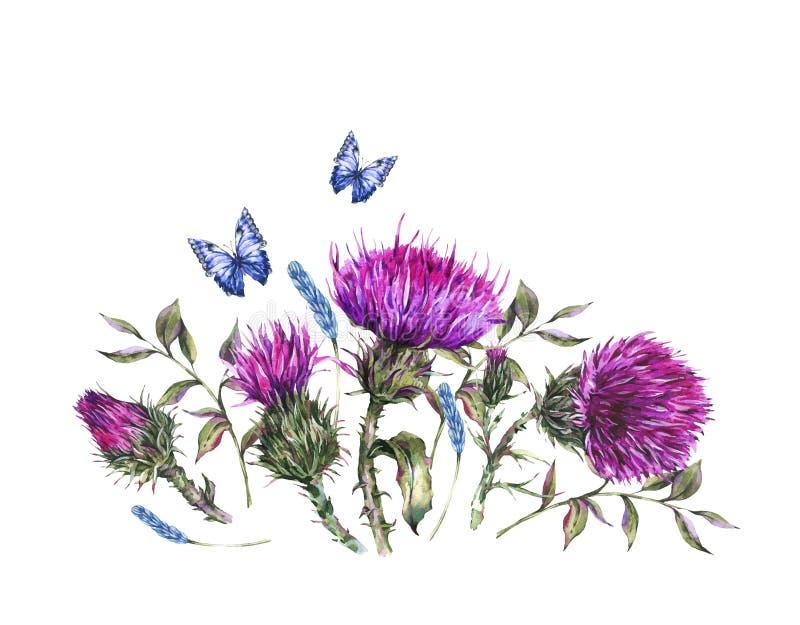 Cardo selvatico dell'acquerello, farfalle blu, illustrazione dei fiori selvaggi, cartolina d'auguri d'annata delle erbe del prato illustrazione vettoriale