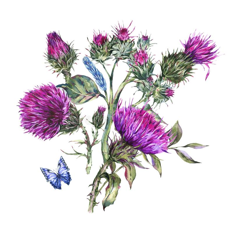 Cardo selvatico dell'acquerello, farfalle blu, illustrazione dei fiori selvaggi, erbe del prato illustrazione di stock