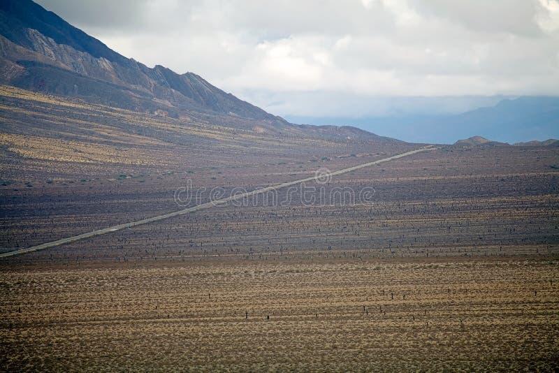 Cardon kaktus på nationalparken för Los Cardones, Argentina royaltyfri foto