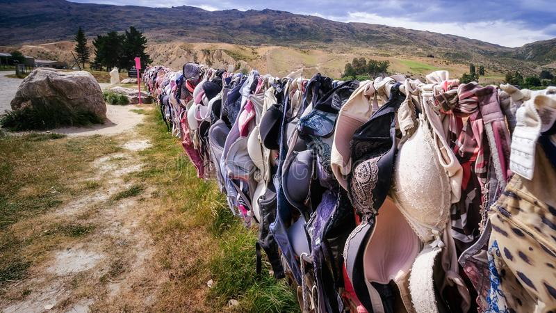 Download The Wall Of Bras In New Zealand Editorial Photography - Image of bras, crown: 109465527
