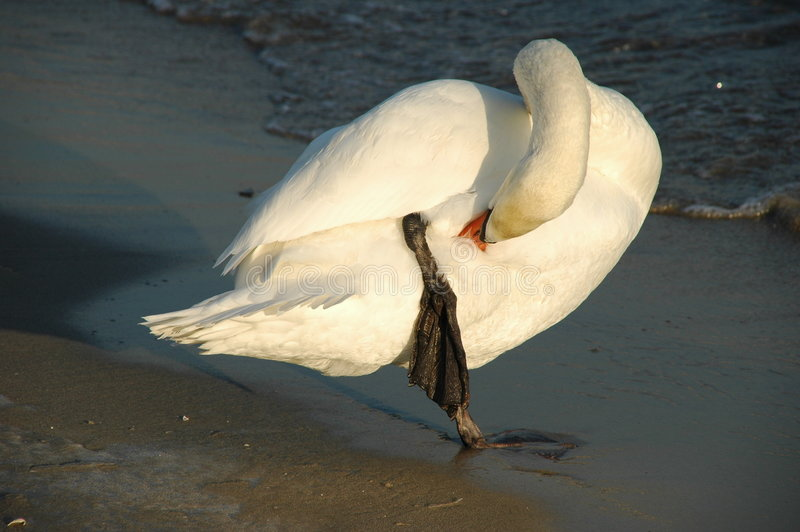 Download Care stock image. Image of bird, cleaning, clean, freezing - 473589