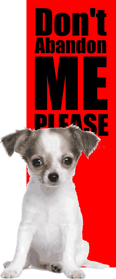 Free Care For Stray Pets Royalty Free Stock Photo - 9061045